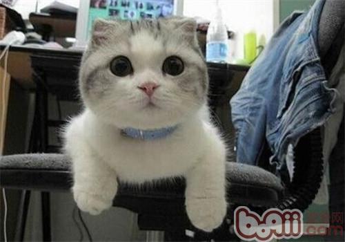 如何让猫咪摆脱邋遢-成猫饲养